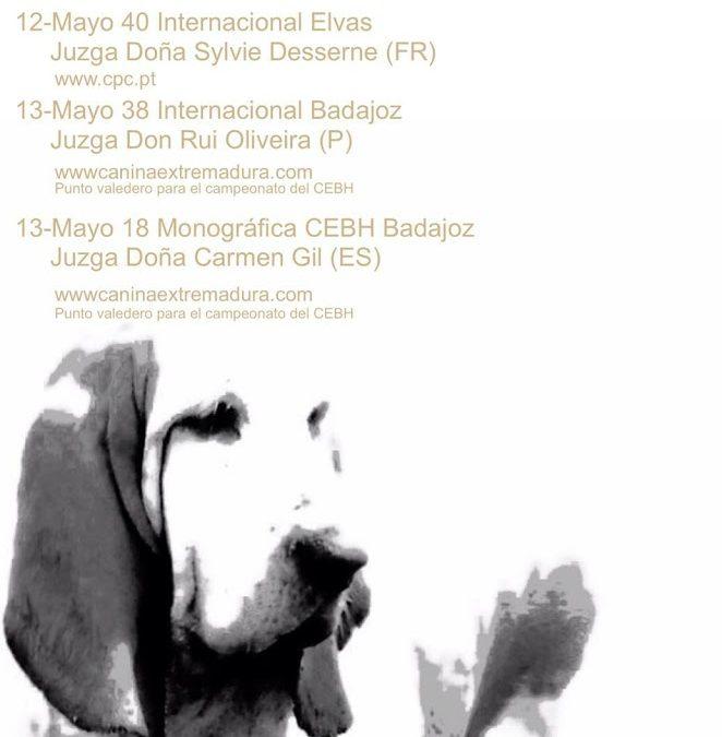 XVIII Exposición Monográfica sin CAC de Badajoz