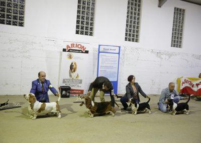 Exibición Basset hound, Jávaga, Cuenca (1143)