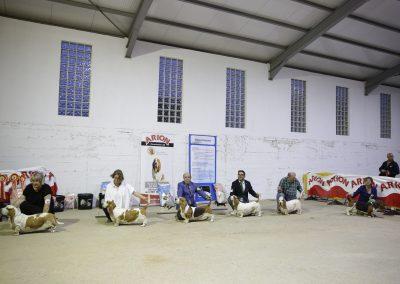 Exibición Basset hound, Jávaga, Cuenca (796)